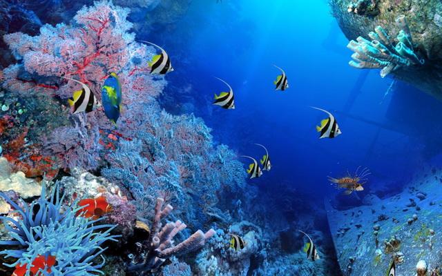 Viaggi pacchetti escursioni sharm el sheikh mattiatour for Sfondi pesci tropicali